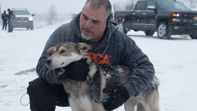 Officials: 30 wolf-dogs, 14 horses seized from 'deplorable conditions' in Wisconsin
