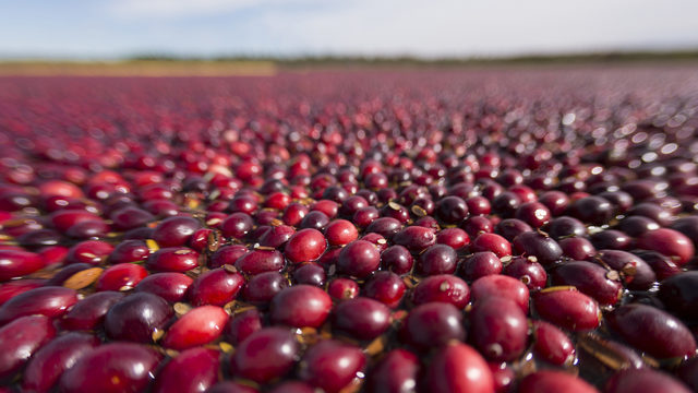 Cranberry research station to be located in Jackson County