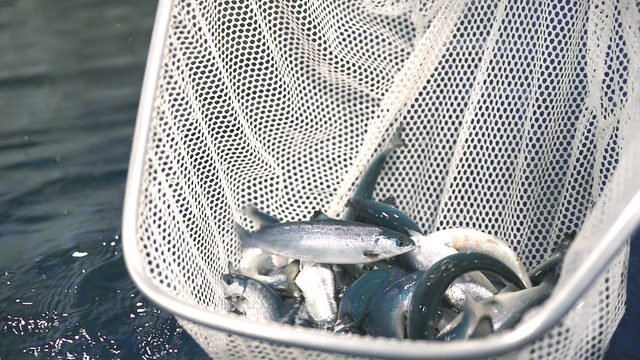 Finding a sustainable catch in Madison
