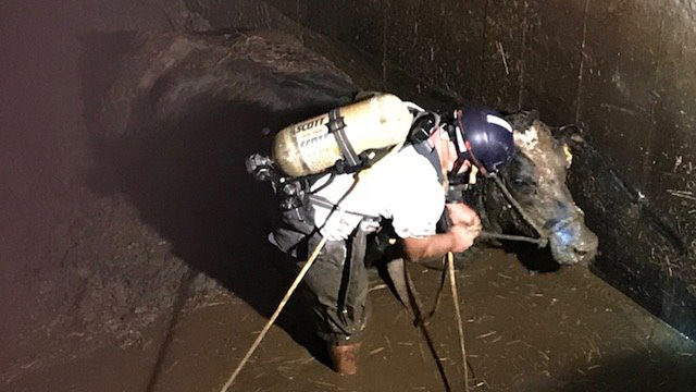 2 cows rescued from underground manure pit in Waunakee, fire officials say