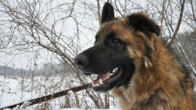 'How could you shoot this beautiful creature?': Blue Mounds family wants justice after two dogs shot