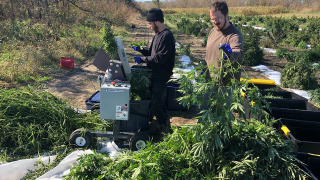 Hemp farmers hope bankers will realize value of crop, while bankers say they have concerns