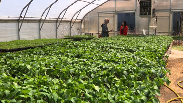 Climate change affecting local farmers, produce