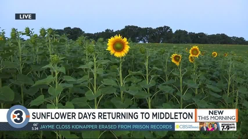 Plan your trip to Middleton's Sunflower Days, returning with new events on July 26
