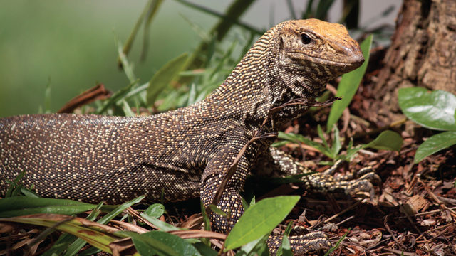 Which exotic pet is right for you?