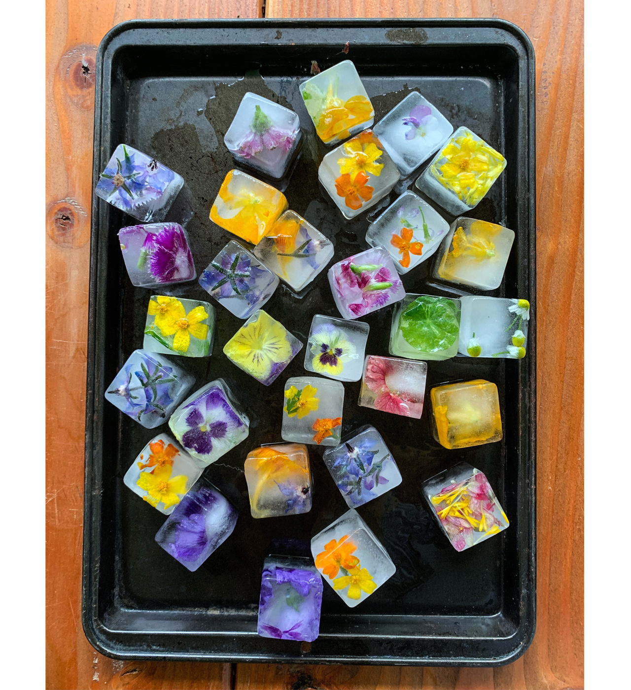 Square ice cubes with colorful edible flowers frozen into them on a cookie sheet