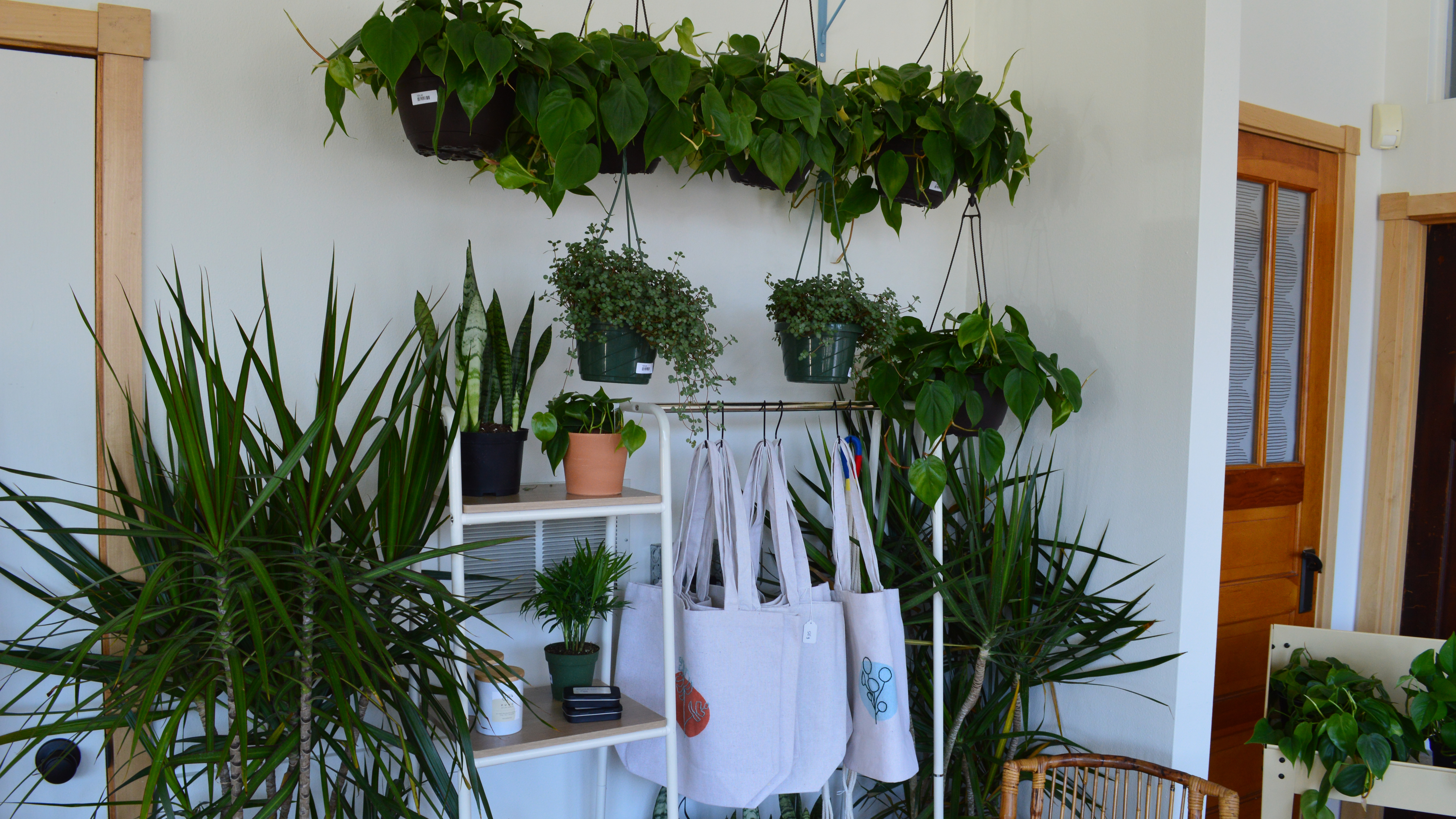 New plant-focused boutique opens on Madison's east side