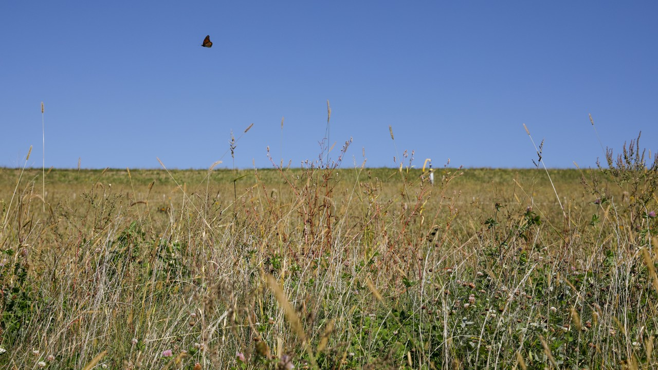 field with a butterfly floating past