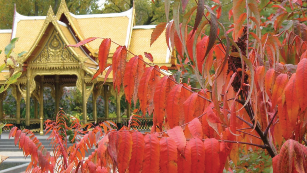 Olbrich Thai Temple in the fall
