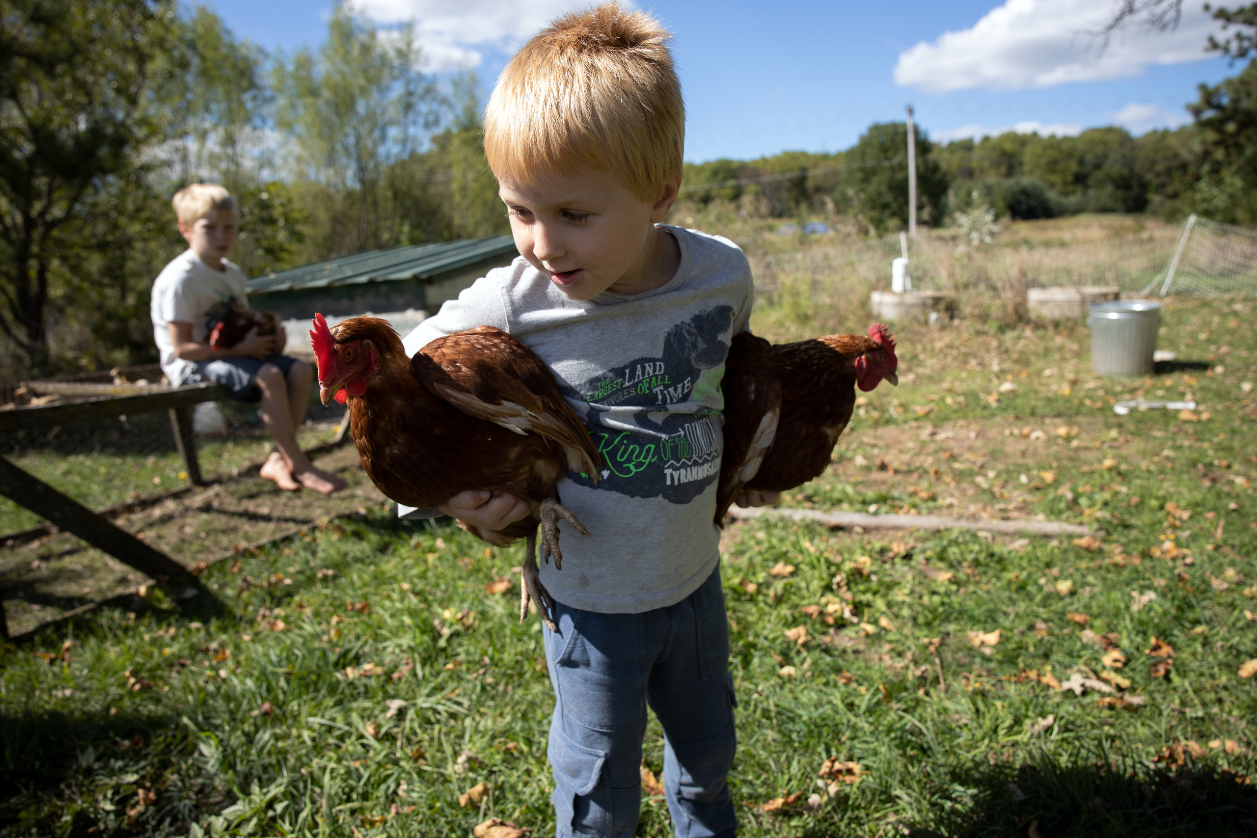 Matthias Millar, 5, foreground, and Sterling Millar, 7, hold chickens outside their father's house in Blue Mounds, Wis., on Sept. 18, 2020. Matthias is in kindergarten and Sterling is in second grade. Both attended school virtually for the first month due to the COVID-19 pandemic. They returned to class Oct. 1, but the Barneveld School District has now suspended in-person instruction because of a positive case in the district. Their sister Adara, 10, is in fifth grade. Their father Matt Millar works from home as a data scientist, and says he doesn't have a lot of extra time to manage his children's education.