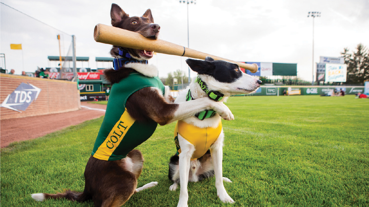 two bat dogs on the baseball green